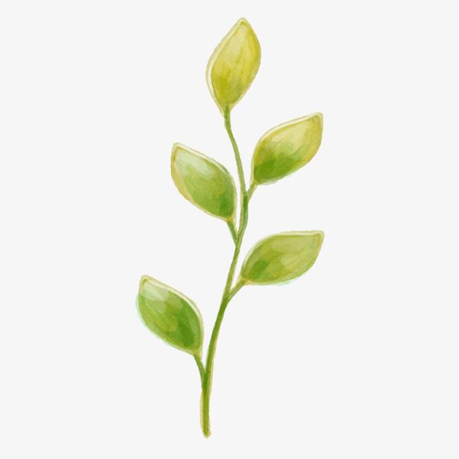 图片 > 【png】 绿色植物素材  分类:手绘动漫 类目:其他 格式:png 体