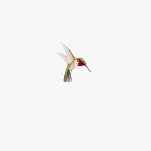 一只鸟免扣素材图片