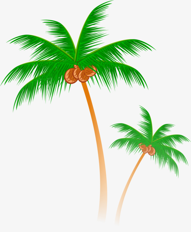 矢量手绘椰树