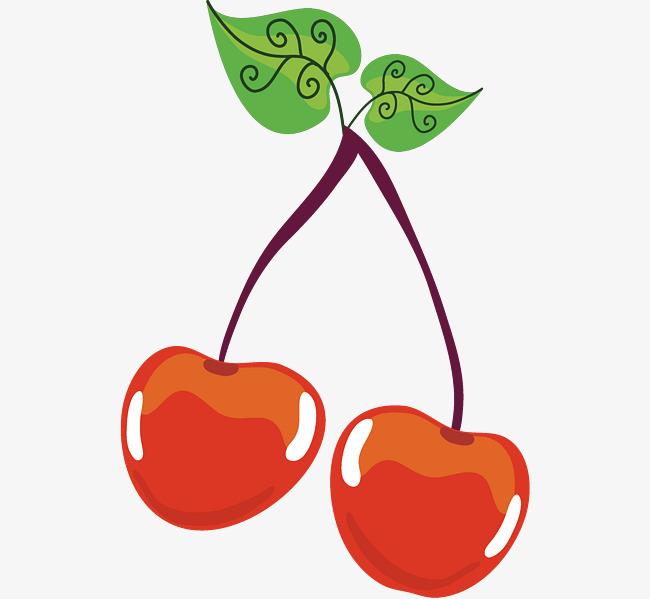 樱桃果实手绘结构图