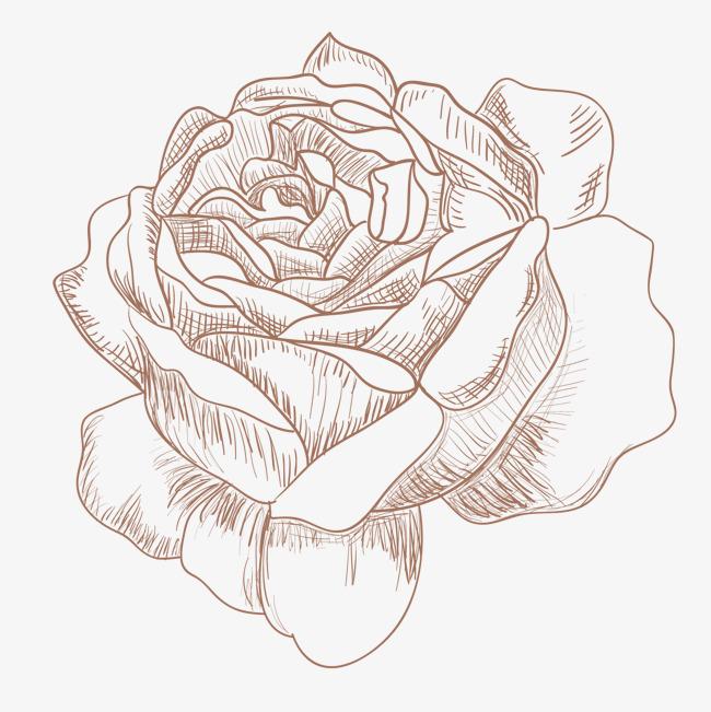 手绘玫瑰花素材