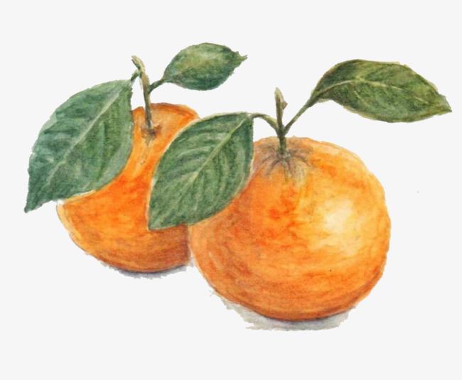 2017彩铅手绘句橘子素材