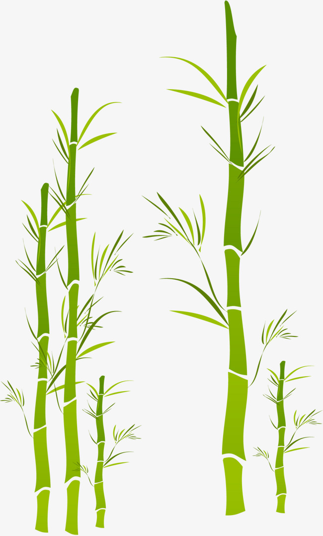 矢量手绘竹子