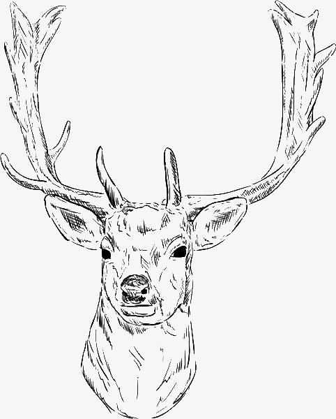 卡通手绘鹿头