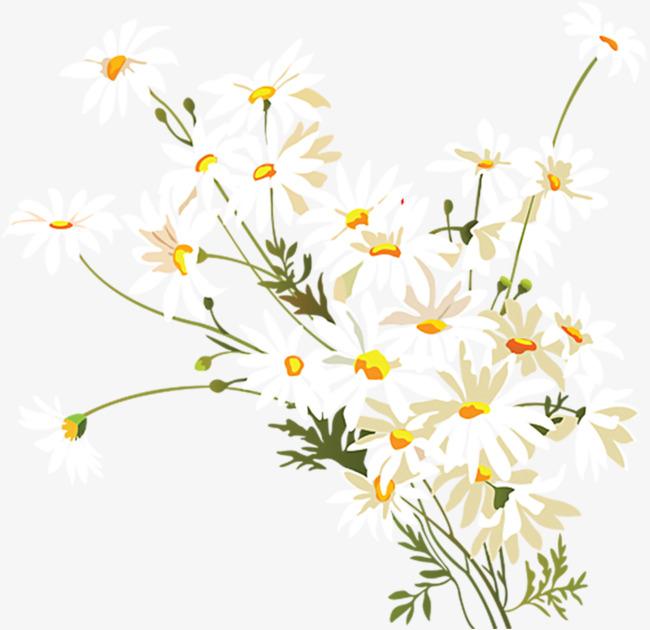 手绘小雏菊