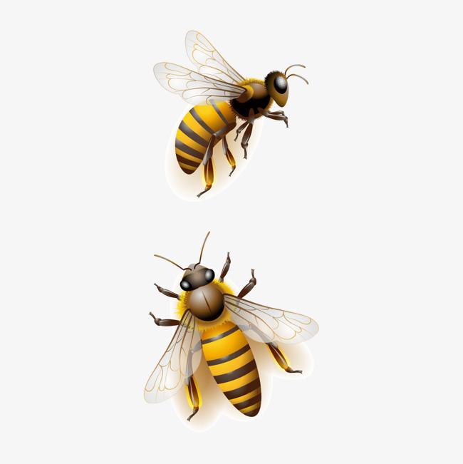 图片 > 【png】 蜜蜂,卡通蜜蜂,淘宝素材  分类:漂浮元素 类目:其他图片