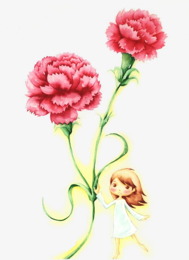 手绘红色康乃馨