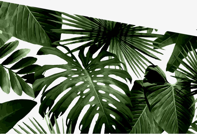 芭蕉树叶手绘图案