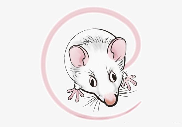 手绘卡通老鼠
