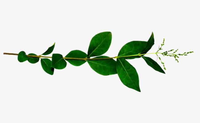 绿色海报_绿色树叶png素材-90设计