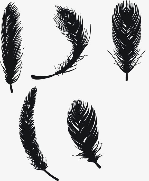 好看的羽毛手绘
