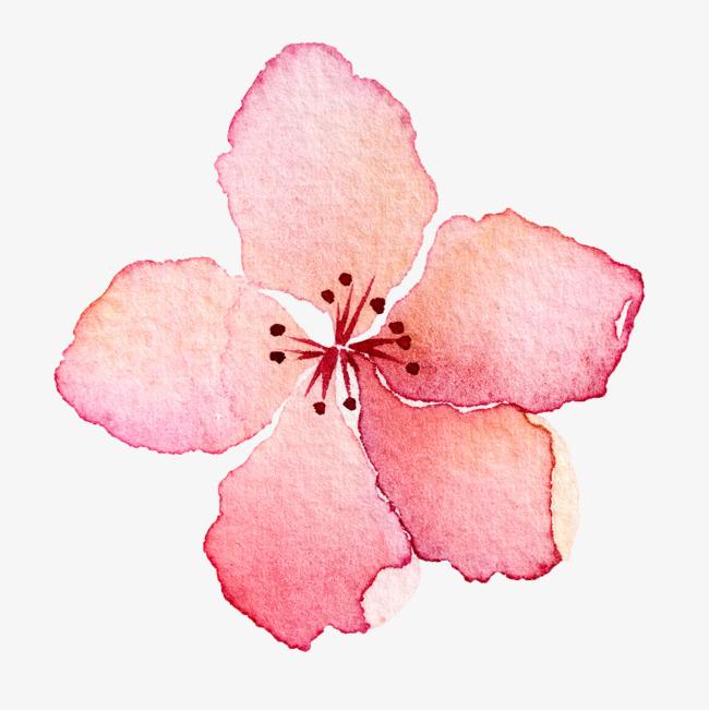 水彩手繪粉色櫻花