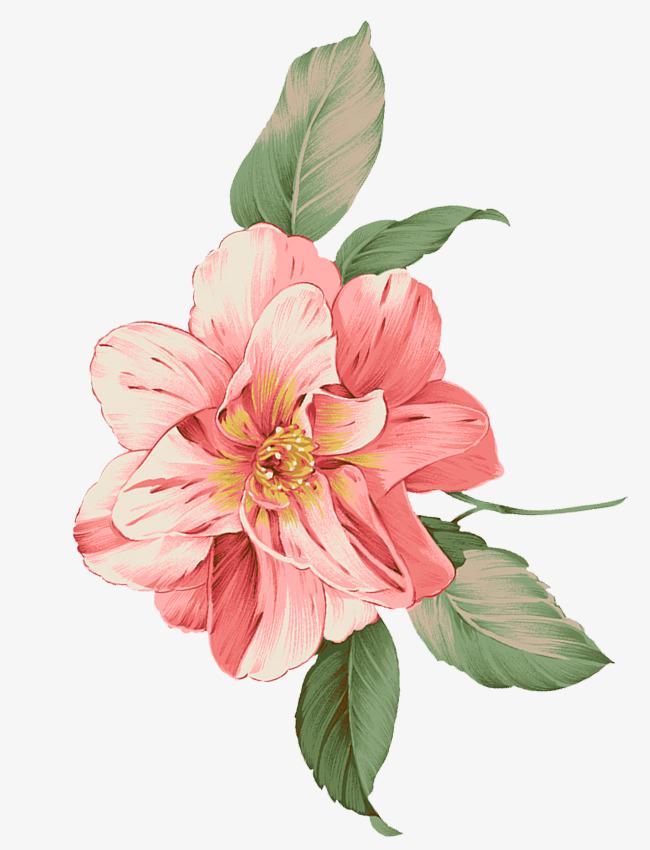 清新手绘粉色鲜花