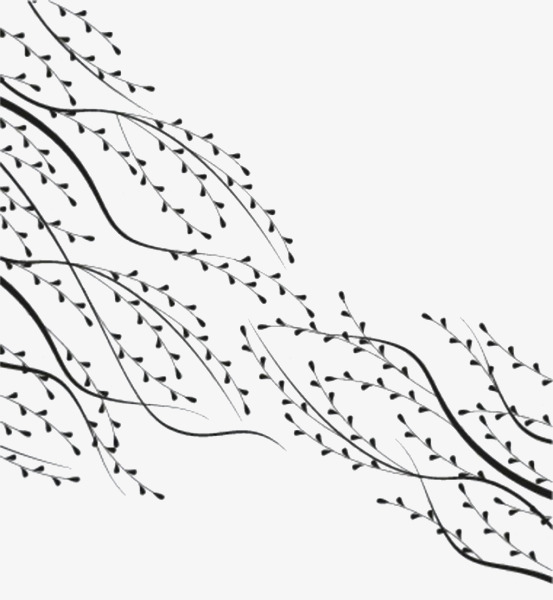 黑白柳枝手绘图