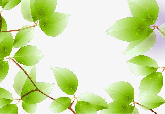 春天清新树叶图片