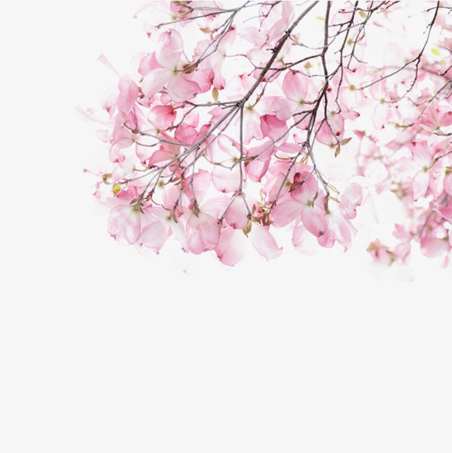 水彩手绘桃花素材