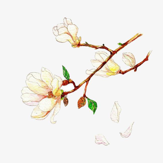 手绘水彩花枝