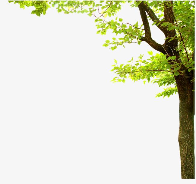 清新绿树png