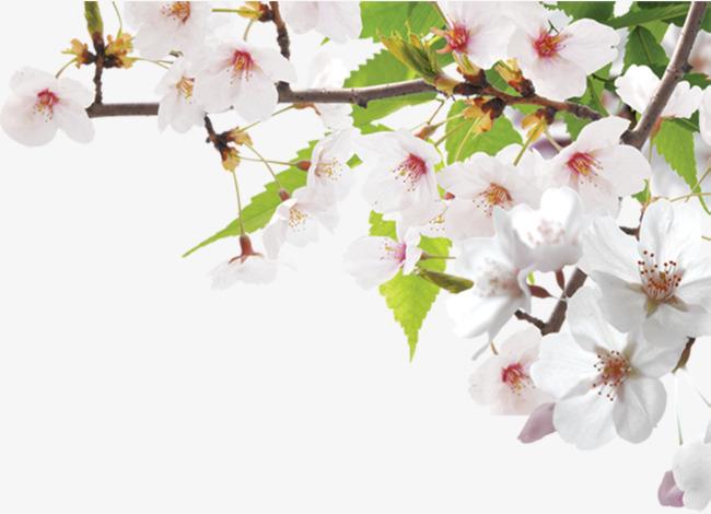 墙角春天靓丽桃花