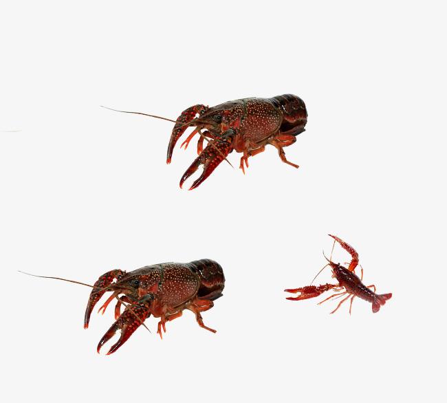 新鲜小龙虾
