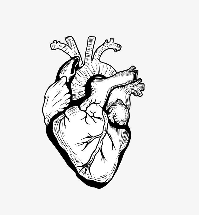 矢量黑色创意心脏器官