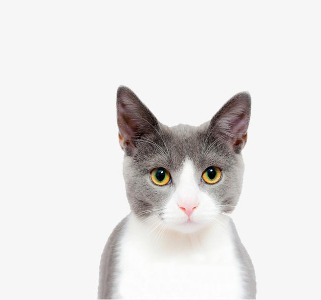 壁纸 动物 猫 猫咪 小猫 桌面 650_608