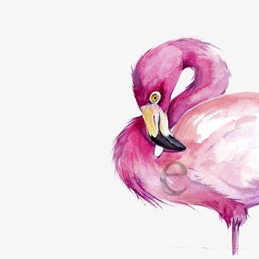 图片 > 【png】 水彩火烈鸟  分类:手绘动漫 类目:其他 格式:png 体积