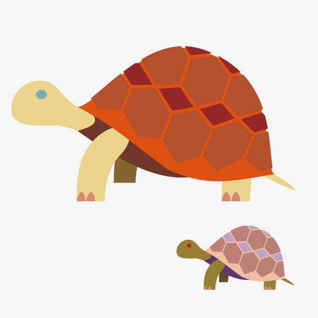 透明背景两乌龟矢量图