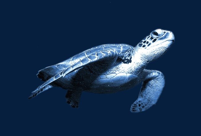 勇猛海里动物图片