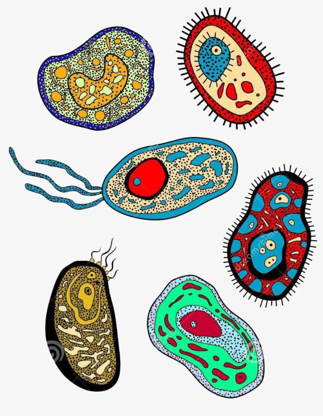 可爱彩色生物医学细胞手绘图