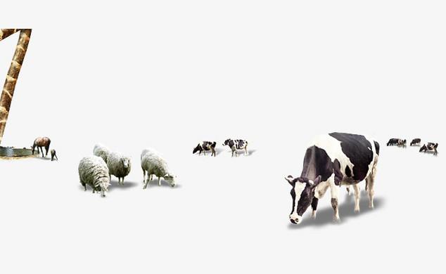 成群的动物牛羊