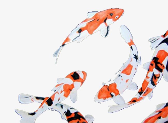 手绘鲤鱼群