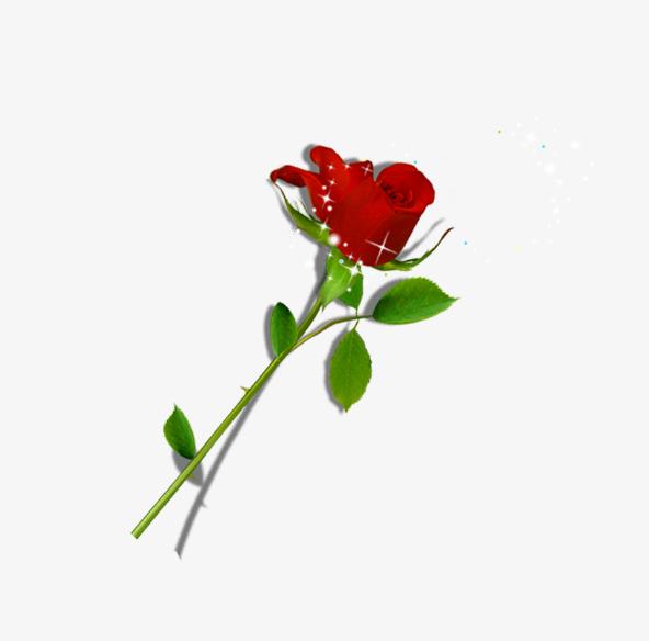 红色玫瑰花装饰图案【高清装饰元素png素材】-90设计
