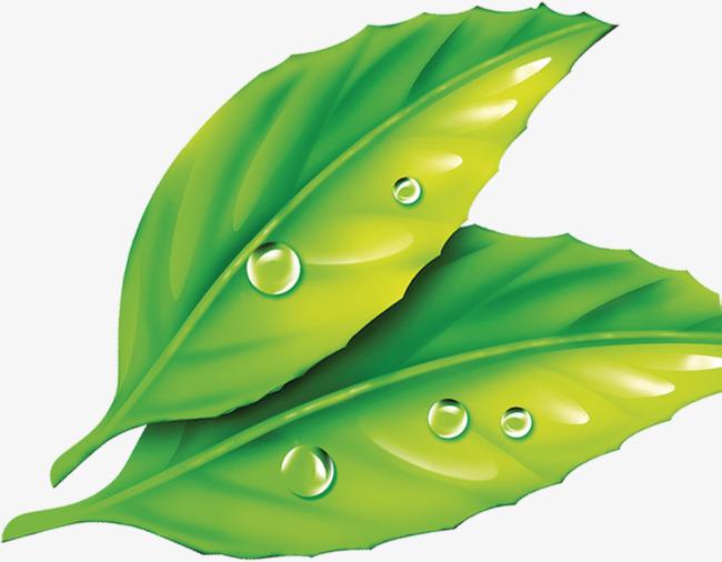 图片 装饰元素 > 【png】 绿色露珠树叶卡通图片