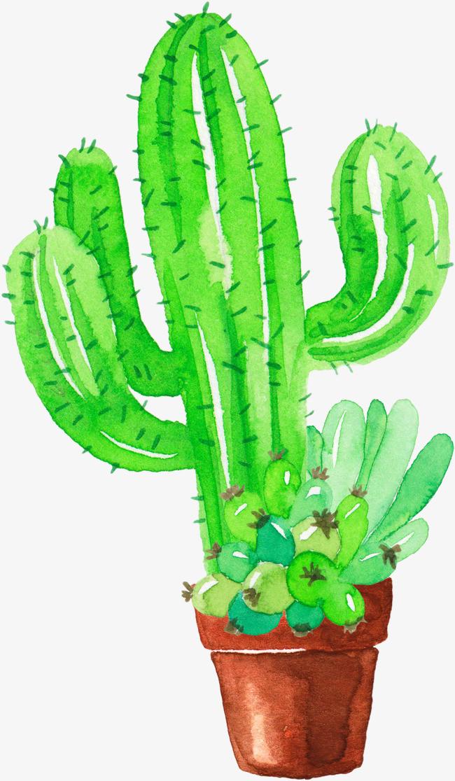 清新绿色手绘水彩植物仙人掌