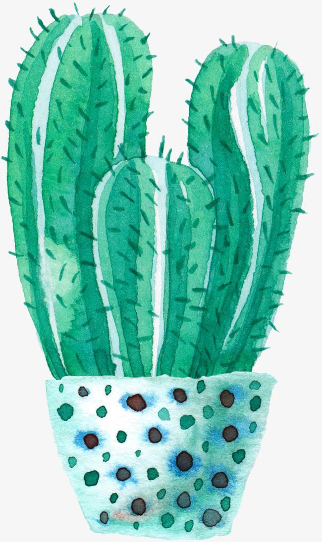 水彩盆栽仙人球
