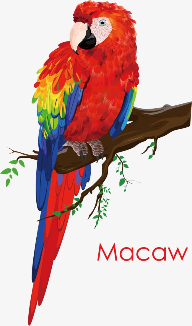 图片 > 【png】 彩色鹦鹉  分类:手绘动漫 类目:其他 格式:png 体积