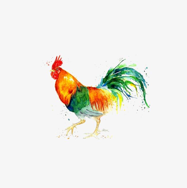 水彩画动物鸡