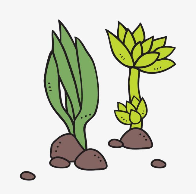 卡通多肉植物