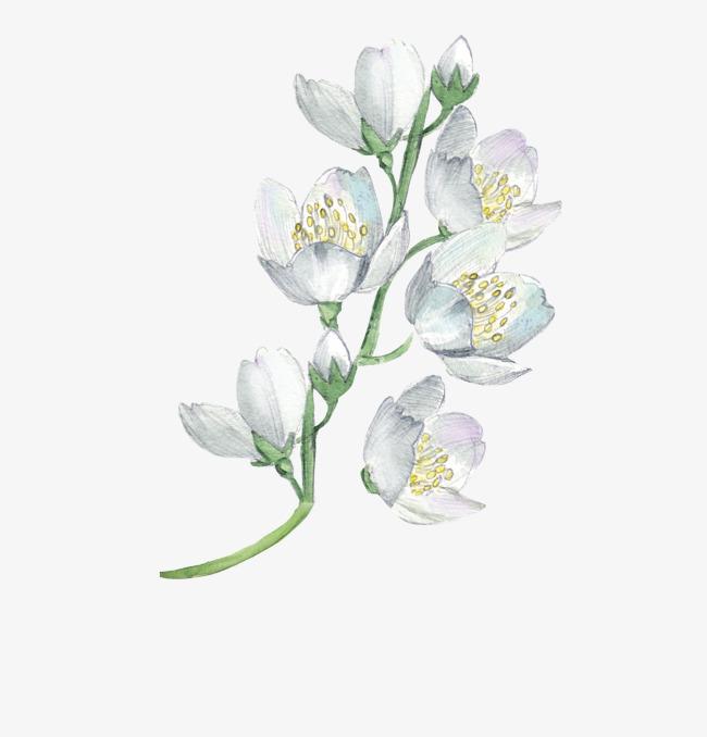 图片 手绘卡通 > 【png】 手绘花朵  分类:效果元素 类目:其他 格式