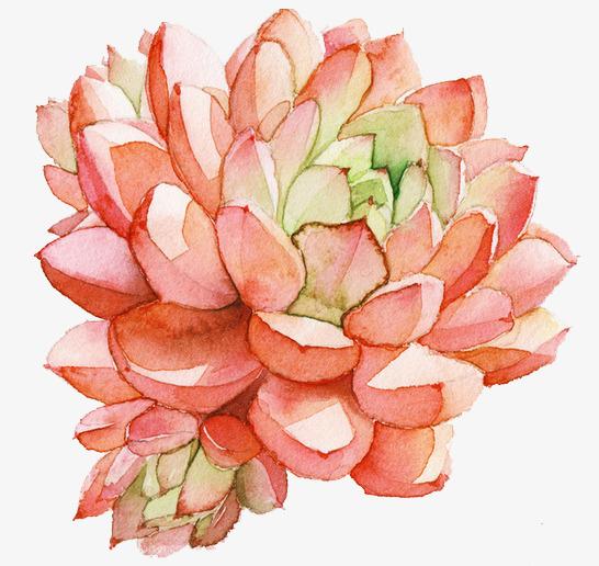 手绘水彩多肉植物