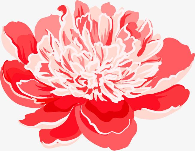 手绘的牡丹花