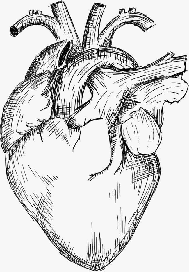 手绘心脏图片