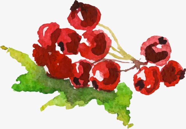 手绘水彩红色果子