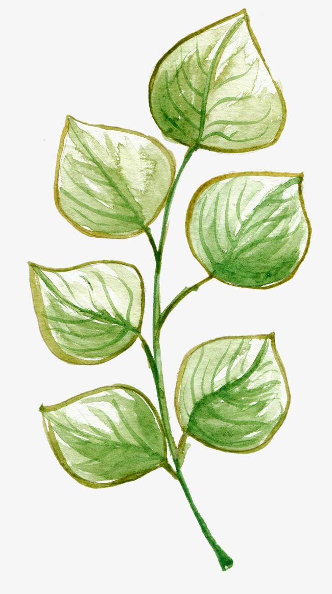 手绘水彩绿色叶子装饰图案