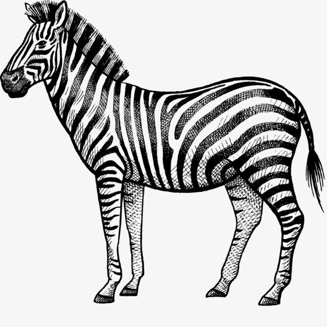 手绘黑色线条动物斑马