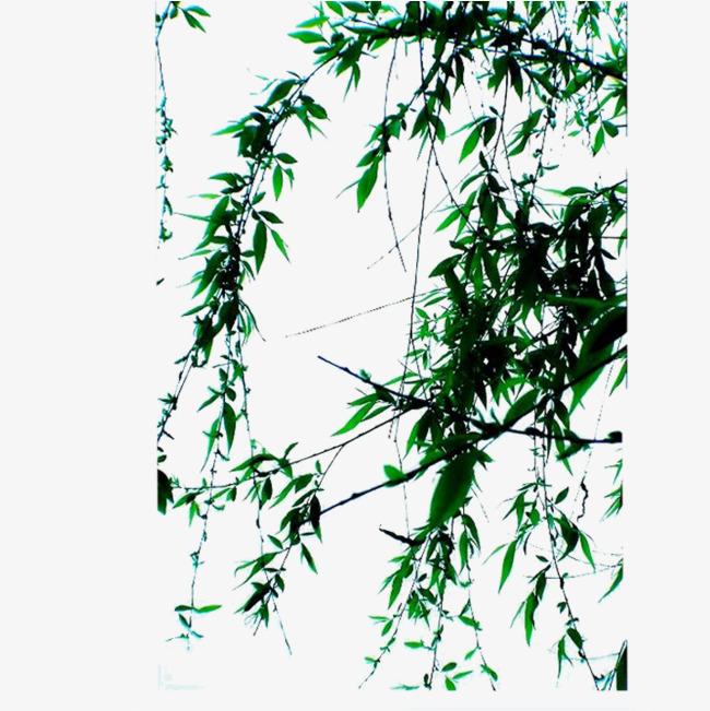 手绘水墨中国风柳树png素材-90设计