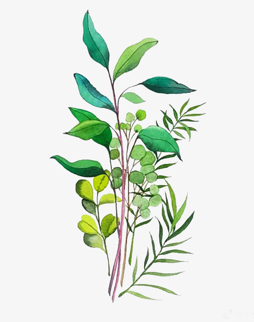 图片 水彩背景 > 【png】 水彩叶子  分类:手绘动漫 类目:其他 格式