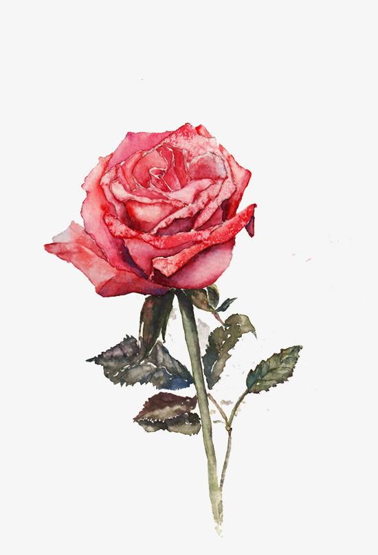 简约手绘玫瑰花