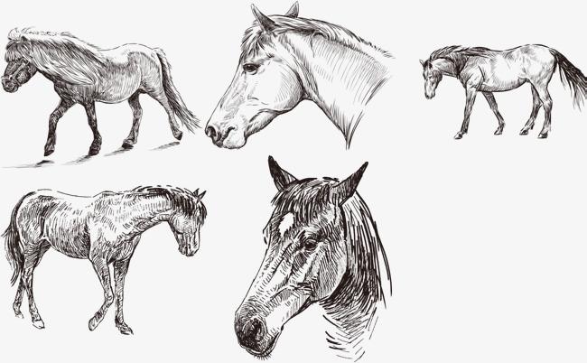 铅笔画马头步骤